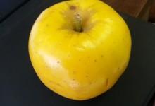 "The Opal Apple…or the apple ""Opal"""