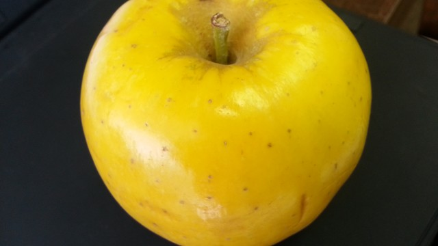 "The Opal Apple…or the apple ""Opal"""